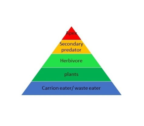 underworld-ascendant-ecology-pyramid